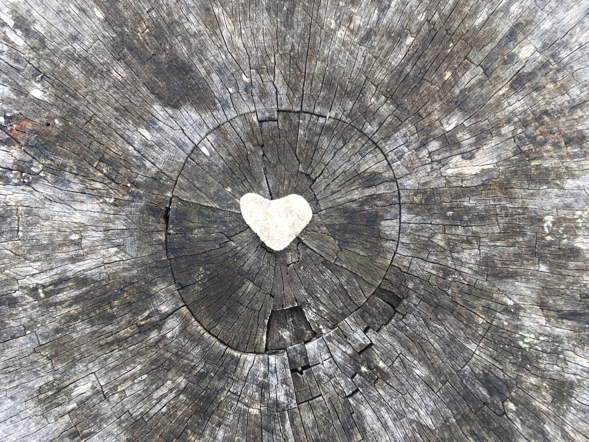 heart-shaped rock in the center of a weathered stump